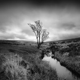 Lone tree by a river in the Sally Gap