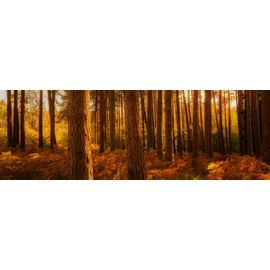 Knockree Forest Panorama