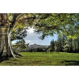 The Fairy Tale Tree, Powerscourt