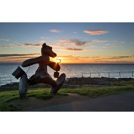 Greystones Beach Bear